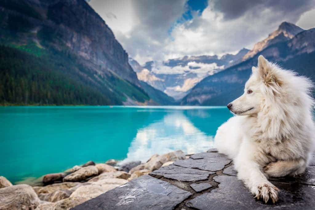 A dog in front of a lake and mountains