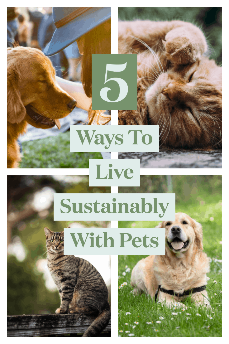 Living Sustainably with Pets