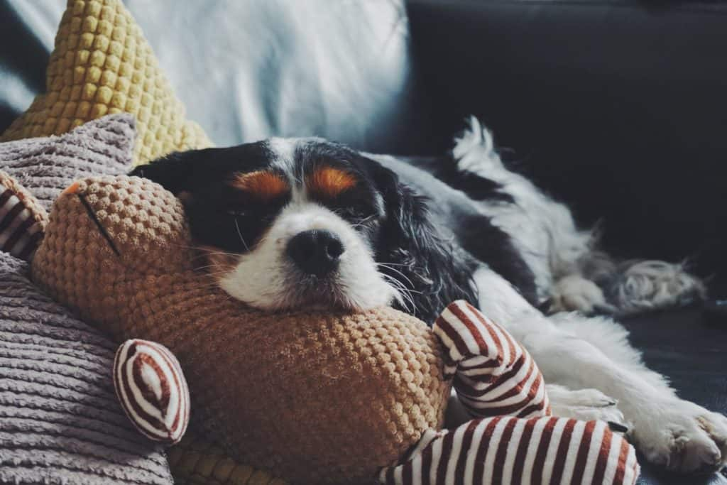 One dog lying across an ethical dog toy which is shaped like a rabbit