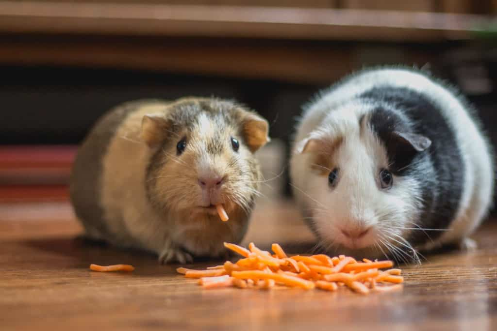 Two hamsters eating sustainable hamster food