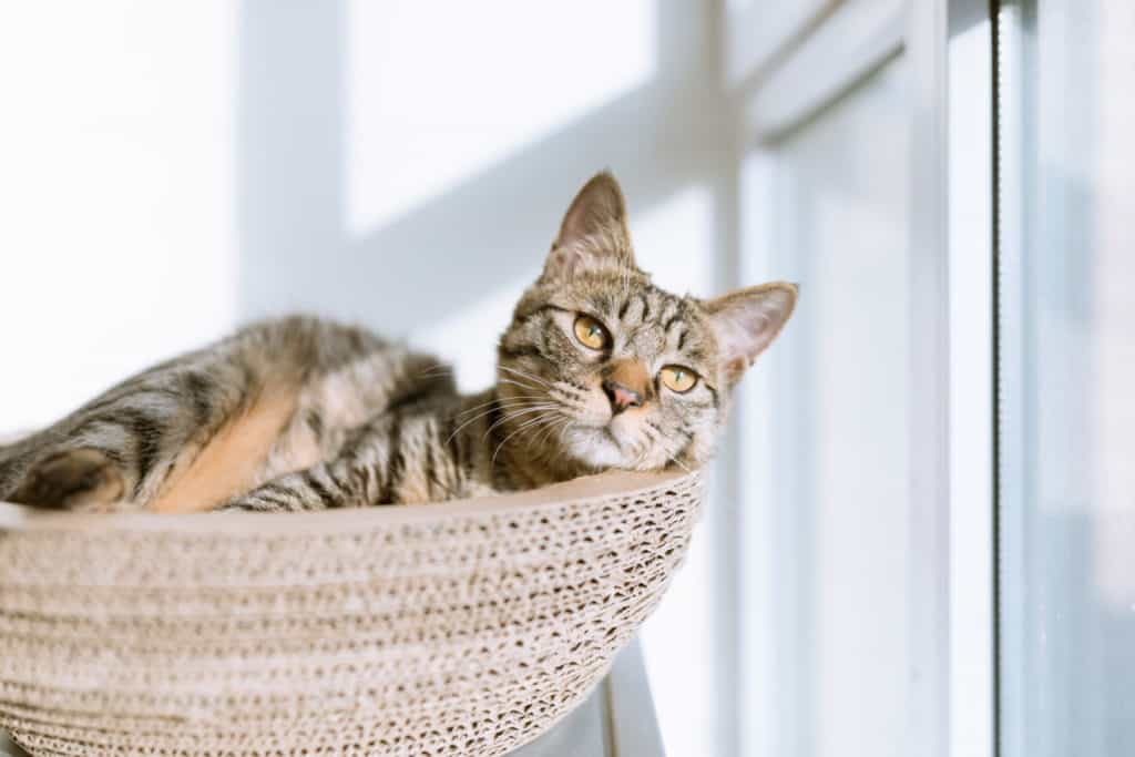 A cat lounging in a cat basket by the window