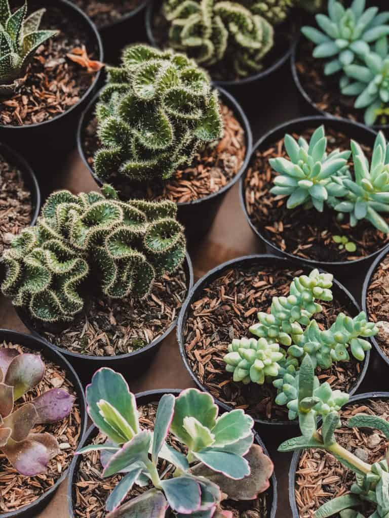how to choose a plant