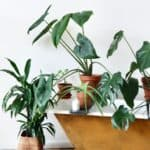 easy houseplants to take care of
