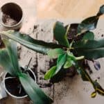 when to repot a plant