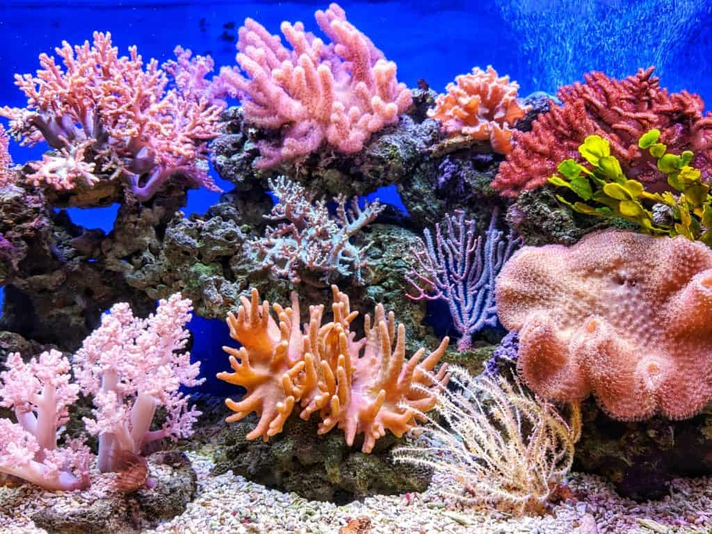 why are coral reefs important
