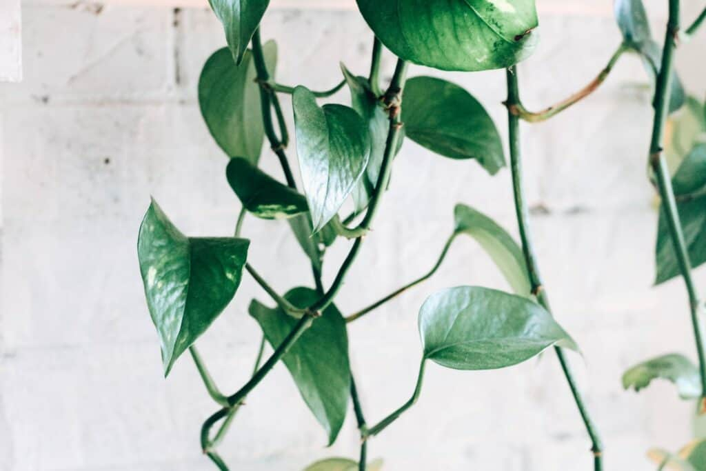 how to propagate a plant